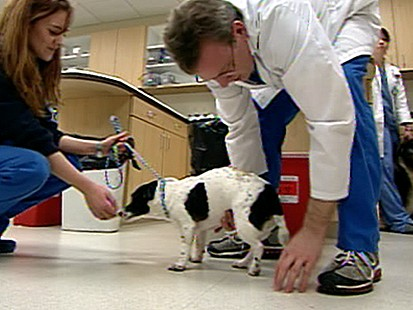 VIDEO: less Pets Pricey Health Care