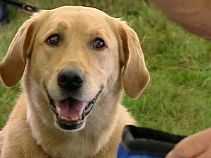 VIDEO: 80 Years With Mans Best Friend