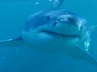 Watch: Caught on Tape: Newlyweds' Terrifying Close Encounter With Shark