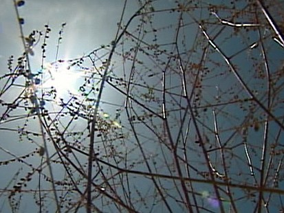 VIDEO: What Texas Drought Means for You
