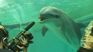 VIDEO: Flippers trainer Ric OBarry saves dolphins