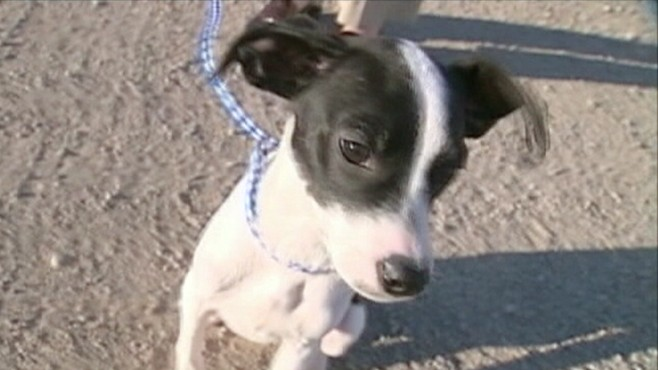 VIDEO: A dog lives to bark another day after being euthanized and declared dead.