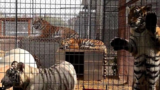 Zoo Confidential Video Abc News