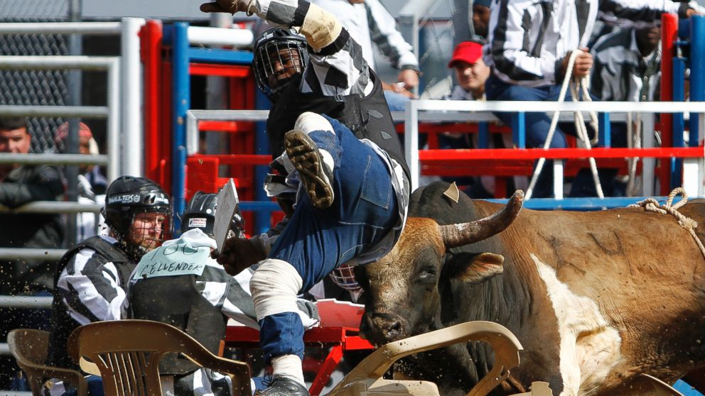 Ride Em Inmate Prison Rodeo Opens Gates For Guts And