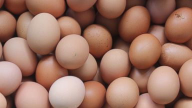 14 people sickened in multistate salmonella outbreak possibly tied to large, cage-free eggs: FDA