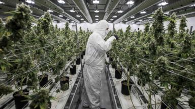 Canadians legalize cannabis, but they may not have enough