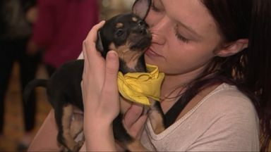 Puppies rescued from hurricane-ravaged areas to star in 'Puppy Bowl'