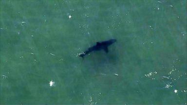Shark attack in Massachusetts