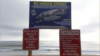 Friend describes trying to save bodyboarder attacked by shark