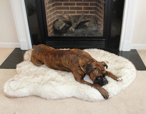 Paw.com: Dog Beds & Waterproof Throw Blankets