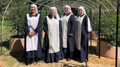 Self-styled 'weed nuns' put faith in the healing powers, and profits, of cannabis