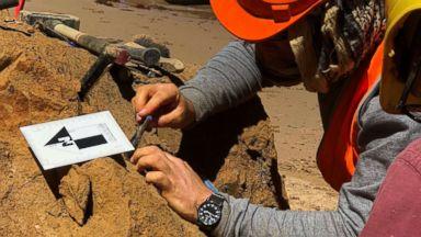 Australian teacher finds massive prehistoric shark teeth twice the size of a Great White's