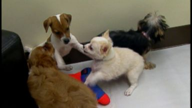 Puppies to blame for sickening hundreds of people: CDC