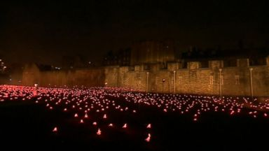 Haunting, beautiful installation at the Tower of London marks end of WWI