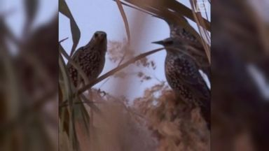 Migratory birds make shapes over southern Israel