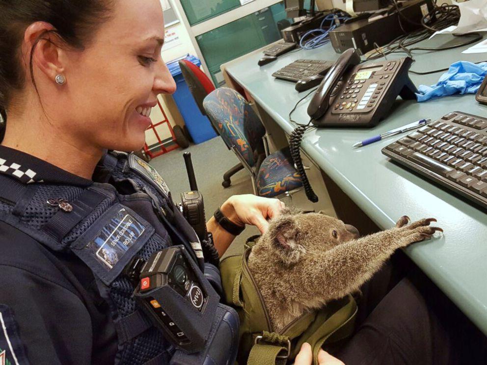 Australian Police Find Baby Koala In Woman S Backpack