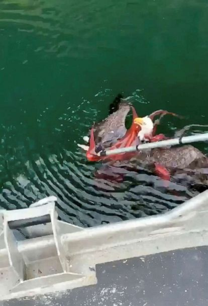 Fishermen break a fight between an eagle and an octopus near the surface of a fjord in Quatsino Sound, British Columbia, Canada, Dec. 9, 2019, in this still image from video obtained via social media.