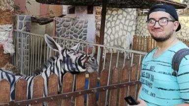 Egyptian zoo accused of bad paint job by coloring donkeys to look like zebras