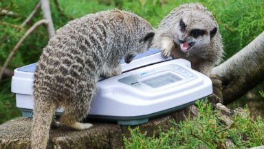 London Zoo weighs, measures all of its animals in adorable event