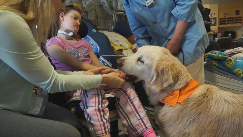Longest Working Therapy Dog At Seattle Hospital Retires