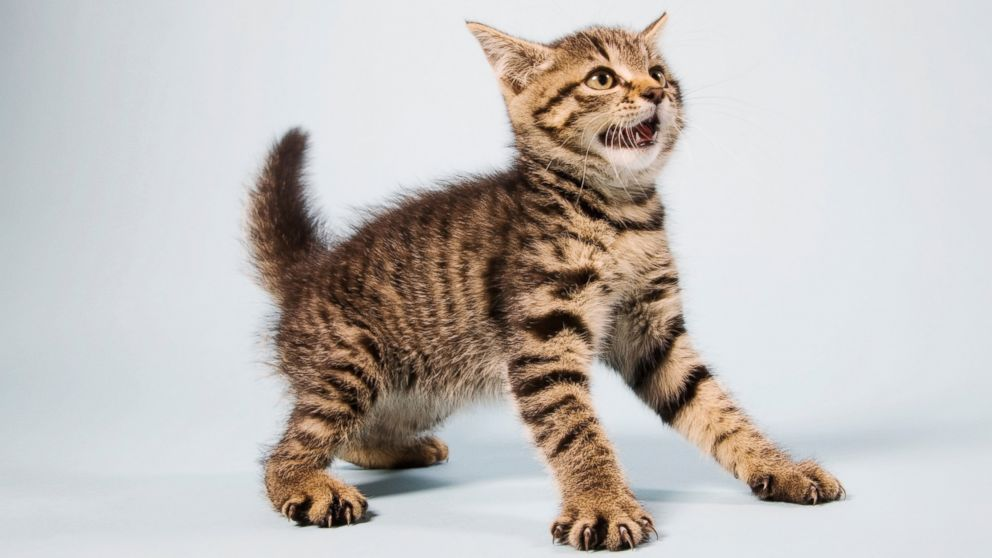 Why These Scaredy Cats Are Absolutely Terrified of ...