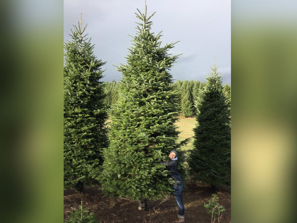 A 20-Foot Christmas Tree Wouldn't Fit In Their Home, But