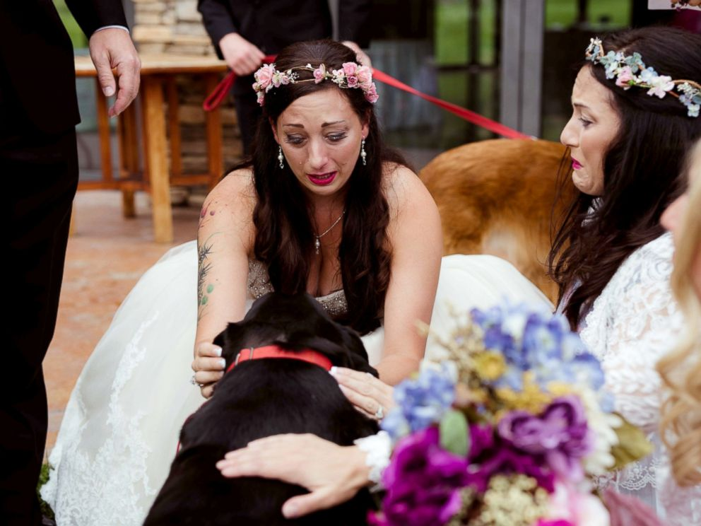 FOTO: Il 1 ° settembre, damigella d'onore Katie Lloyd effettuata Charlie Orso, 15, le sue sorelle morenti cane, lungo il corridoio durante il suo matrimonio in Buena Vista, Colorado.