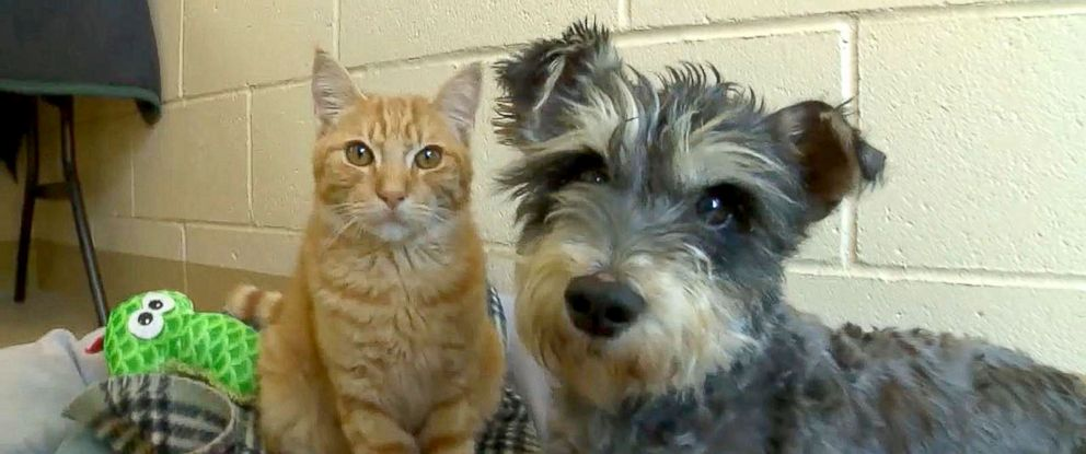 Meet Romeo The Cat And Juliet The Dog Star Crossed Lovers