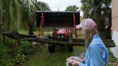 Wood from canoe unearthed by Irma estimated to be more than 300 years old
