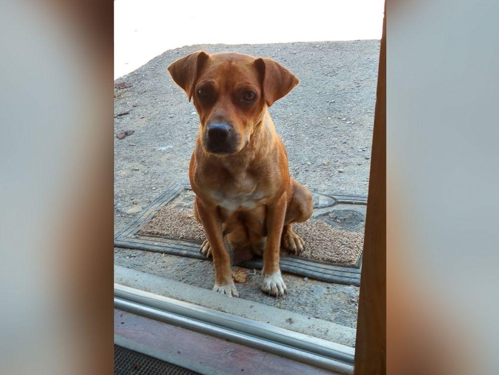 FOTO: Uno sposo e il suo partito groomsmens laurea in Tennessee è stato rilevato quando hanno scoperto questo cane - una madre di 7 cuccioli.