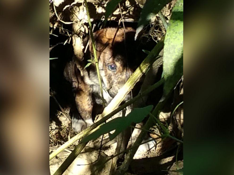 FOTO: I partecipanti festa di laurea hanno trovato questo cucciolo, insieme ad altri 6, in un buco scavato nel bosco.