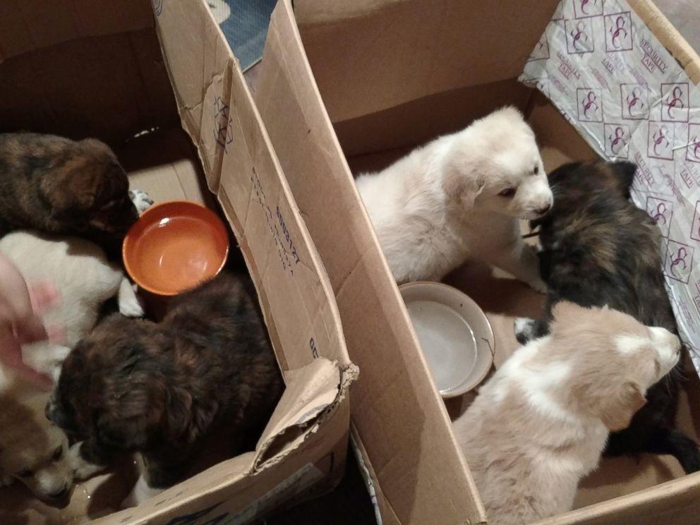 FOTO: I 7 cuccioli che sono stati trovati durante l'addio al celibato ora tutti hanno case a Vicksburg, Michigan.