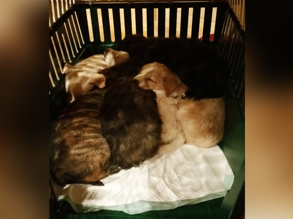 FOTO: I cuccioli erano in condizioni di buona salute quando gli uomini li ha trovati. Ognuno aveva una grande pancia grasso su di loro, ha detto Craddock, lo sposo.