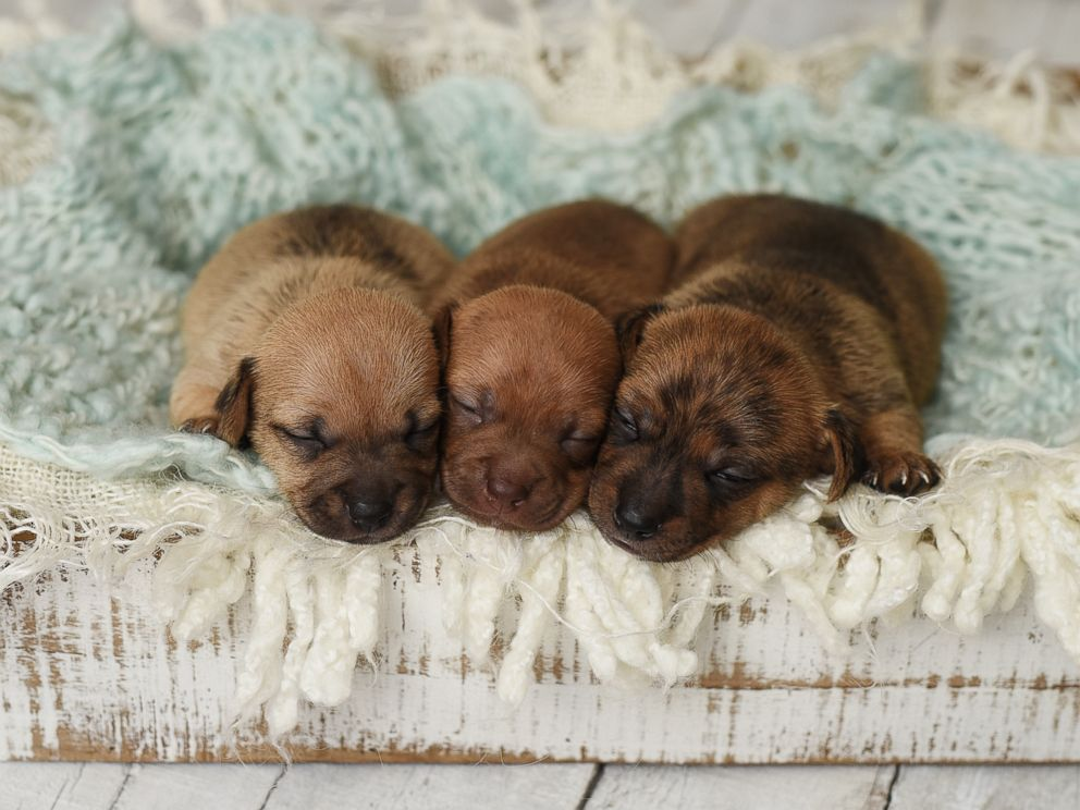 Newborn Photography Poses ~ Styles Of Newborns