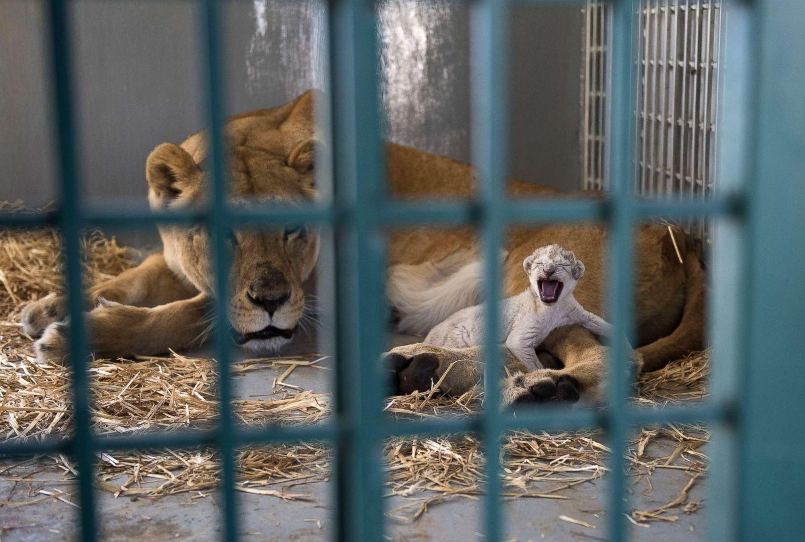 white lions leipzig