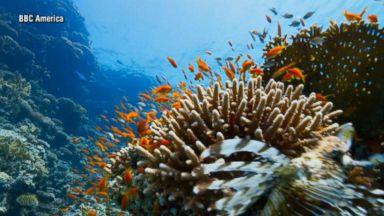 'Blue Planet' captures the fascinating behaviors of underwater creatures