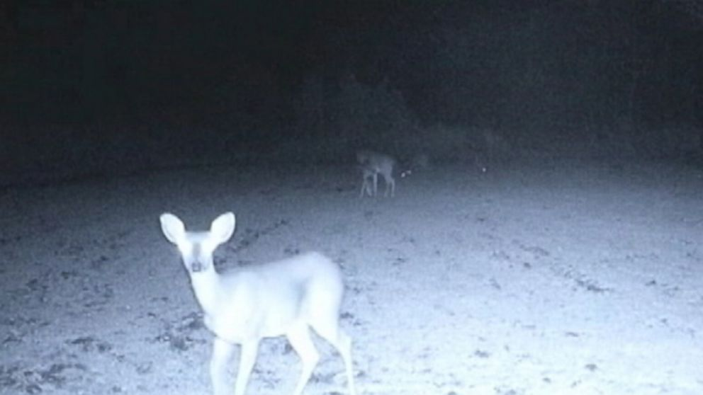 UFOs Descend on Deer in Mississippi Woods Video - ABC News