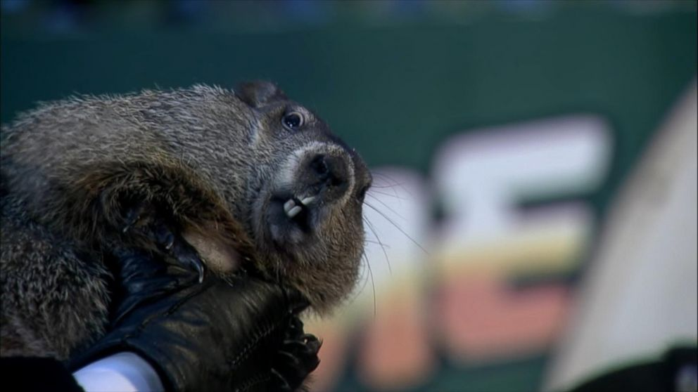 Groundhog Day Facts Video