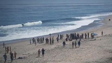 Eyewitnesses recount shark attack