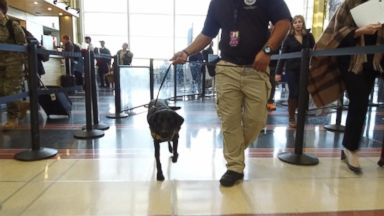 TSA thinks floppy-eared working dogs at the airport have a more welcoming face