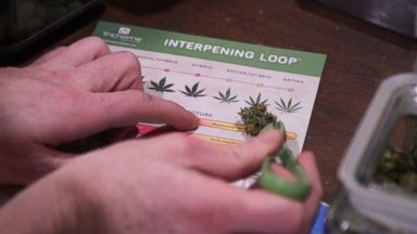 'Interpening': Interpreting terpenes to know how cannabis will make you feel