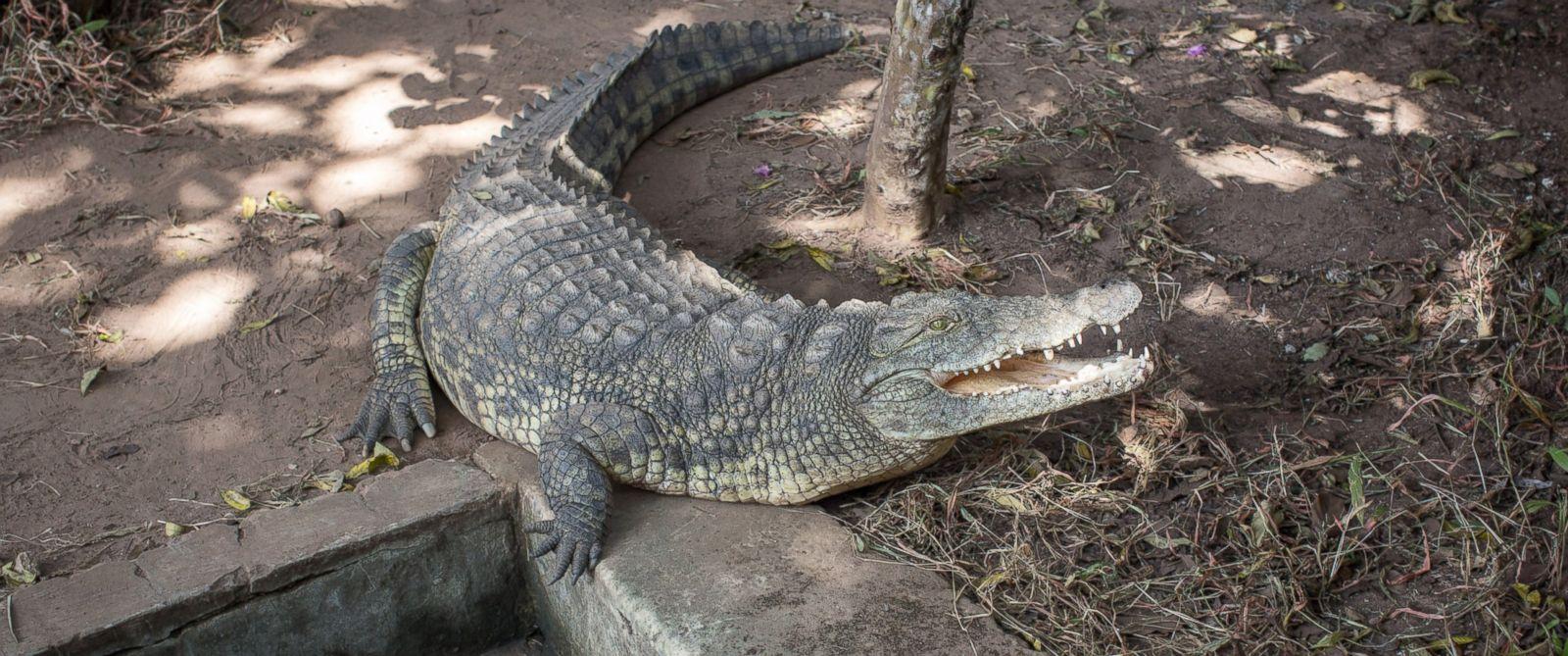 Crocodiles Sex 45