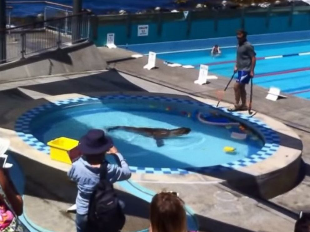 Watch Sea Lion S Hilarious Visit To An Oceanside Resort