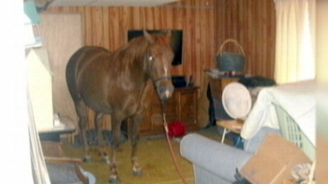 Horse Falls Through Window Into Basement Video Abc News