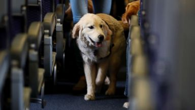 Delta Air Lines imposes new rules tightening leash on support animals
