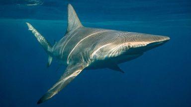 Shark bites surfer in Florida waters: Authorities