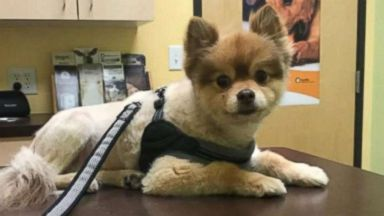 Dog dies during Delta Air Lines layover, cause unclear