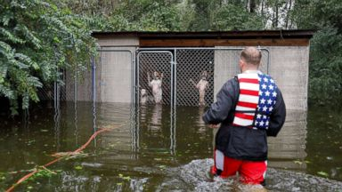 Video of dogs rescued from locked cages in rising Florence floodwaters goes viral