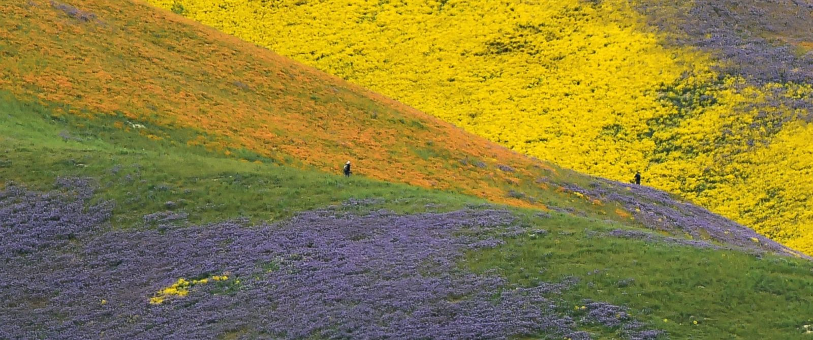 See The Amazing Super Bloom In Central California Abc News