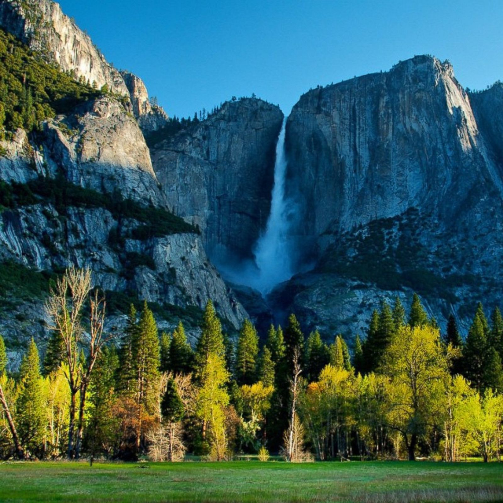 Spring Flowers Yosemite National Park: The Beauty Of America's National Parks Photos